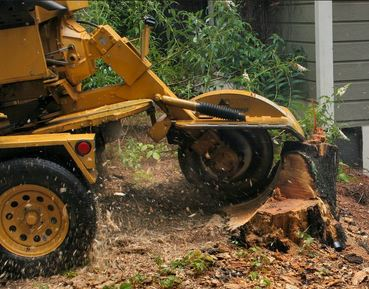 Stump Removal & Grinding Service